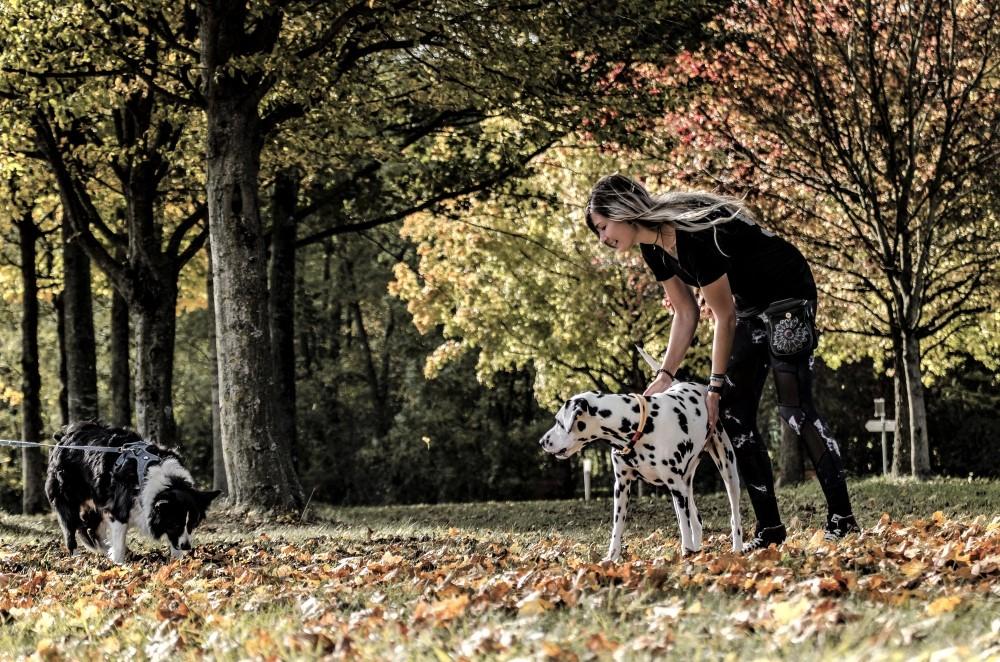 Junge Frau streichelt Dalmatiner und Border Collie schnüffelt im Hintergrund im Herbstlaub