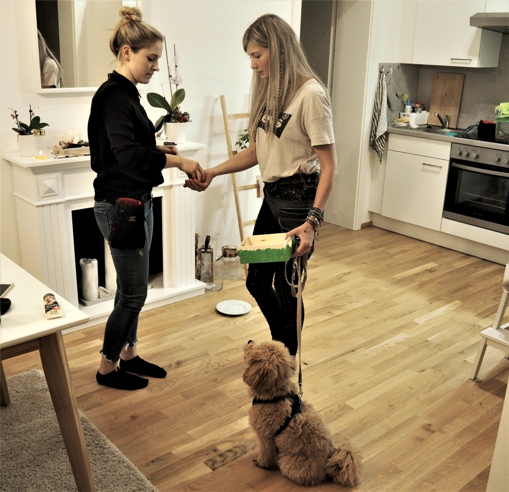 Mobile Hundetrainerin in Aktion beim Training mit Pudel