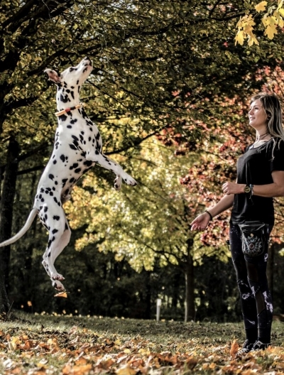 Dalmatiner springt hoch in die Luft