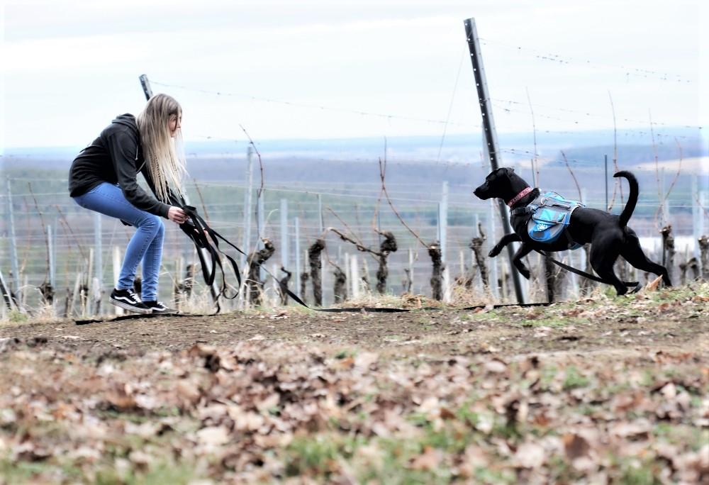 Labrador-Mischling läuft freudig auf junge Frau zu