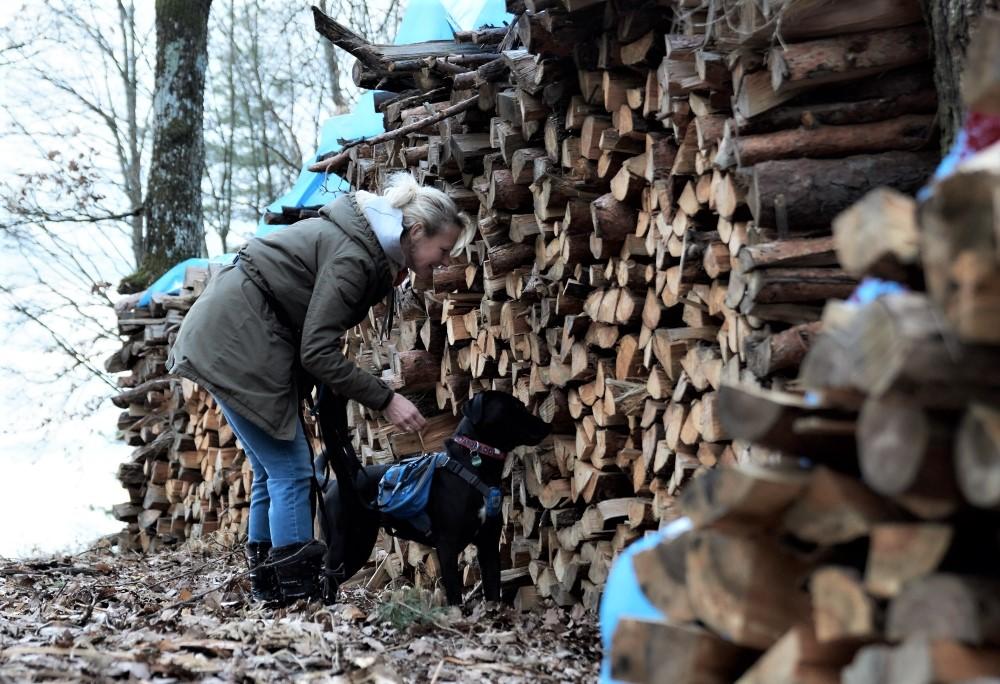 Frau und Hund suchen Leckerlies in einem Holzstoß