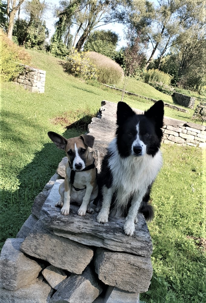 Tierschutzhund und Bordercollie sitzen auf einer Mauer