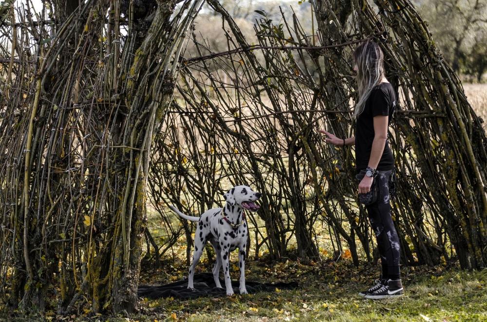 Dalmatiner beim Deckentraining im Park